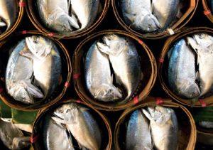 ปลาทู ของกินในสมุทรสงคราม